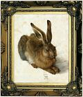 Durer Hare - The Rabbit 1502 Wood Framed Canvas Print Repro 8x10
