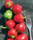 Tinker Bell Mini Red Pepper - sweet and productive!!!