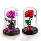Eternal Real Rose Preserved Flower The Little Prince In Dome w Fallen Petals Box