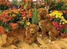 Duck Tollers, A 1000 Piece Jigsaw Puzzle by Cobble Hill