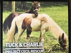 Large Framed Canvas Of Two Rescue Ponies At Project Cecil Rescue Ranch.