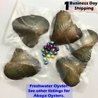 5/10 Bundles Freshwater Oysters Each With 6-10mm Pearl