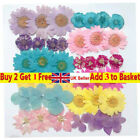 12pcs/bag Pressed Dried Daisy Flowers Necklace Pendant Jewelry Making Diy Uk