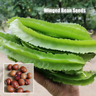 100 - Organic Green Winged Bean Seeds Vegetable Plant Seeds