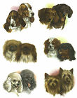 Dog Dachshund Bassett Poodle Yorkie Select-A-Size Waterslide Ceramic Decals Bx image