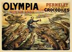 Olympia Crocodiles Alligator Florida Travel Tourism Vintage Poster Repro FREE SH