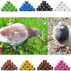 100X Chicken Pigeon Hen Leg Band Poultry Dove Bird Chicks Duck Parrot Clip Rings