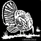 Turkey Decal Md#1 Bird Hunting Vehicles Window Graphic Sticker