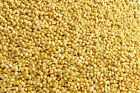 25kg Millet Seed. Yellow, White or Red