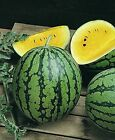 Watermelon Seed: Yellow Gem Sweet Watermelon Seeds  Fresh Seed  FREE Shipping