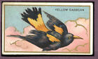 1910 T42-1 White Border Birds Yellow Cassican VG-EX 89583