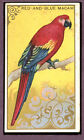 1910 T42-1 White Border Birds Red & Blue Macaw VG-EX 89541