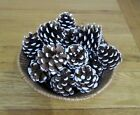 WHITE SNOW TIPPED PINE TREE CONES - FOR CHRISTMAS WREATH DECORATIONS AND CRAFTS