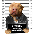 Pit Bull Mug Shot Size Youth Small to 6 X Large T Shirt Pick Your Size image