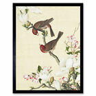 Castiglione Crabapple Tree Birds Painting Framed Wall Art Poster