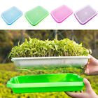 Seed Sprouter Tray Seed Germination Tray 2-layer Micro Greens Seedling Set Kit