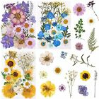 96 PCS Dried Pressed Flowers for Resin Natural Dry Flower for Scrapbooking DIY