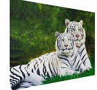 Animal Big Cat Two  White Tigers Canvas Print Wall Art Premium Picture Frame