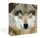 New Premium Wolf Face Close Up Animal Canvas Wall Art Print Framed Ready to Hang
