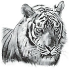 New Solar Trans Animal Tigers Head Portrait  Print TShirt Changes Colour