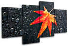 Autumn Leaf Water Drops Floral MULTI CANVAS WALL ART Picture Print VA