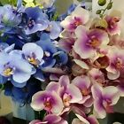 """70cm 27.6"""" WHITE RED GREEN  BLUE REAL TOUCH ARTIFICIAL SILK PU ORCHID FLOWER"""