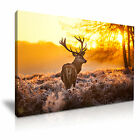 NEW ANIMAL Deer 1 Canvas Framed Printed Wall Art ~ More Size