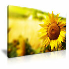 FLOWER Sunflower 2 1-L Canvas Framed Printed Wall Art ~ More Size