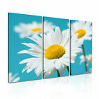 FLOWER Daisy 10 Canvas 3A Framed Printed Wall Art ~ 3 Panels