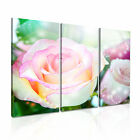 FLOWER Rose 2 Canvas 3A Framed Printed Wall Art ~ 3 Panels
