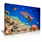 ANIMAL Sealife Canvas Framed Printed Wall Art 3 ~ More Size