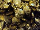 Army Apprentice School Buttons, 17mm or 26mm, Small / Large Wholesale Used / New