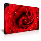 FLOWER Rose Canvas Framed Printed Wall Art 32 ~ More Size