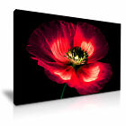 POPPY Large Beautiful Poppy Flower Canvas Wall Art Picture Print ~ More Size