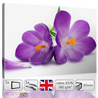 PURPLE FLOWERS FLORAL WHITE BACKGROUND - CANVAS WALL ART FRAMED PRINTS PICTURES