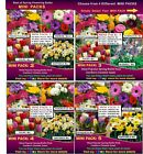 Flower  BULBS*  DAFFODIL- TULIP - Freesias, & More  50x BULBS - MINI PACK