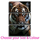 Tiger Canvas Print Canvas Culture Framed Wall Art Treble Picture 5 Gallery Grade