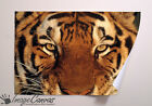 TIGER EYES GIANT WALL ART POSTER A0 A1 A2 A3