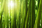 Bamboo Soap / Candle Making Fragrance Oil 1 - 16 Ounce ****Free Shipping****