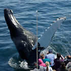MA - Whale Watching Cruise - Boston, MA (Email Certificate Delivery)