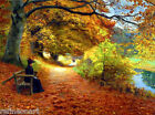 Wooded Path in Autumn - H. A. Brendekilde Giclee Canvas Print