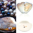 Individually Wrapped Fresh Water Oysters With Large Pearls 0.75-8MM LF