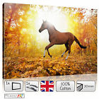 LARGE BROWN HORSE FOREST ANIMAL NATURE STRETCHED CANVAS WALL ART PRINTS PICTURES