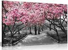 Black & White Wall Art Pink Blossoms Canvas Wall Art Picture Print