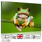 LARGE GREEN FROG ANIMAL NATURE IMAGE - STRETCHED CANVAS WALL ART PRINTS PICTURES