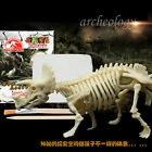 Mini Toy Dinosaur Excavation Kit Archaeology Learning Dig Bones Educational Toy>