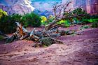 Tree Trunk on Desert Floor -  Art Picture Poster Photo Print 13TRE