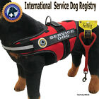 """SERVICE DOG PKG - Vest + Perfect Leash + Rights info - """"Walkabout"""" by LuvDoggy"""
