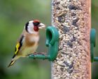 Wheat Free Wild Bird Seed Mix With Mealworms