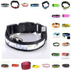 Dog Collar Nylon New Cute Bears Pattern Wide LED Night Safety Lights Pet Collar